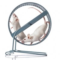 Animal Rights in Research