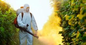 Food vs. Chemical Carcinogens