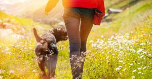 Sit Less, Move More: Six Ways to Sneak More Movement into Your Day