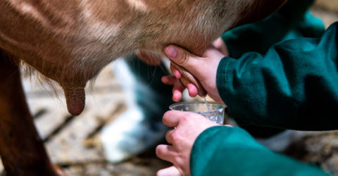 Is Raw Milk Better for You? What About Goat Milk?