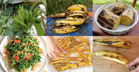 5 Ways to Prepare Ripe Plantains