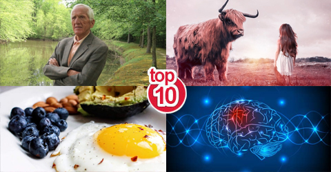 Top 10 Plant-Based News Stories and Articles of 2019