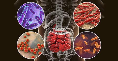 Por qué tu microbioma puede ser el culpable de tu hinchazón: cinco consejos para el equilibrio intestinal