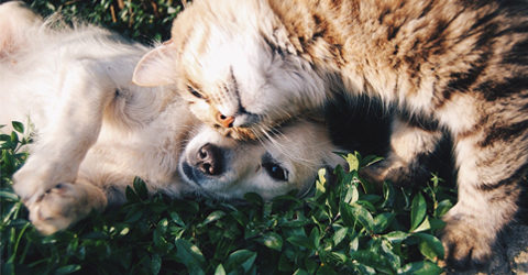 Can Dogs and Cats Eat a Plant-Based Diet?