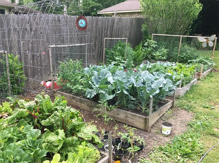 Cosecha - Con una planificación cuidadosa, tu jardín tendrá una temporada de cosecha buena y larga.