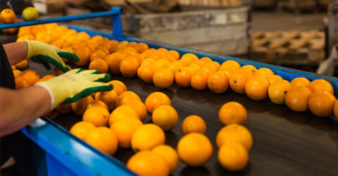 Cómo puedes apoyar a un sistema alimentario más sostenible para un futuro más saludable