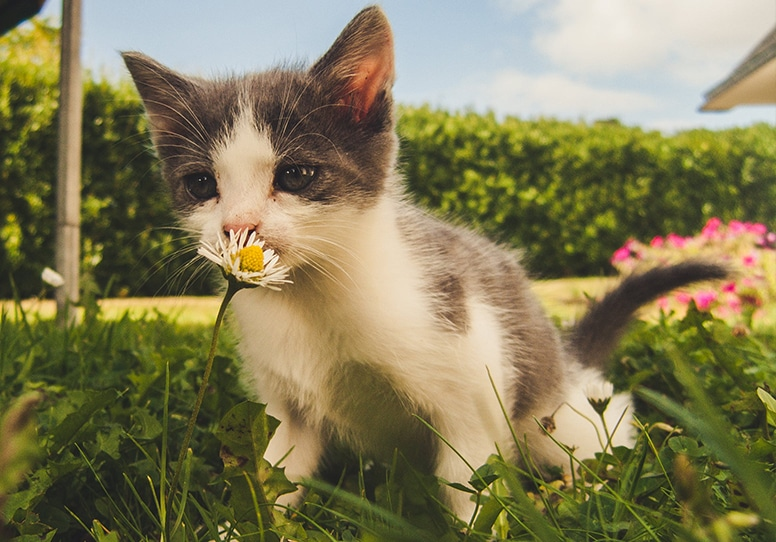 Have You Ever Considered the Environmental Footprint of Your Pet?
