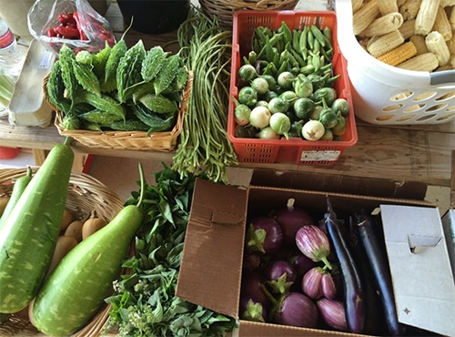 Transplanting Traditions Grows Food With Refugees Farmers in a Way that Honors Their Culture