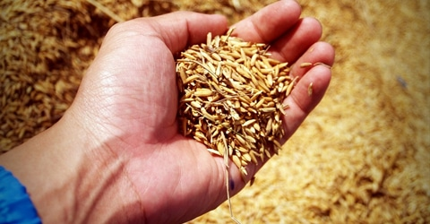 La siembra de semillas para la próxima generación – Por qué necesitamos una agricultura sostenible