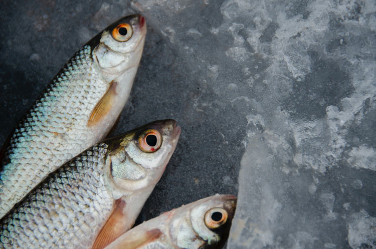 The Health Impacts of Fish and Seafood