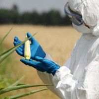 GMO Dangers: Facts You Need to Know